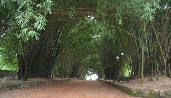 Fildişi Sahili - Bingerville Botanik Bahçesi
