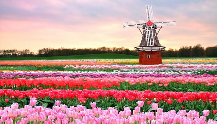 Hollanda Vize Başvurunuzu Kısa Sürede Onaylatın