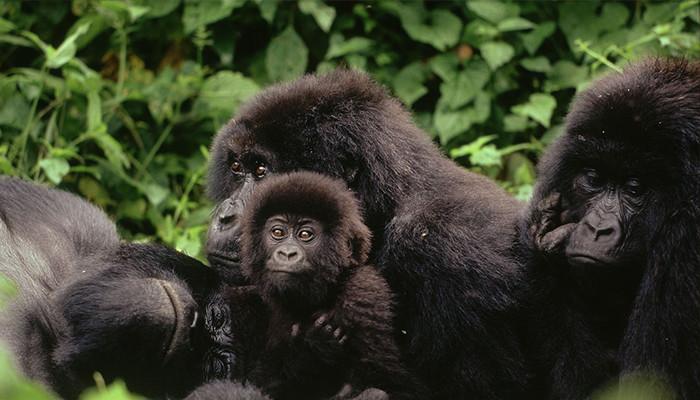 Kongo Demokratik - Virunga Parkı