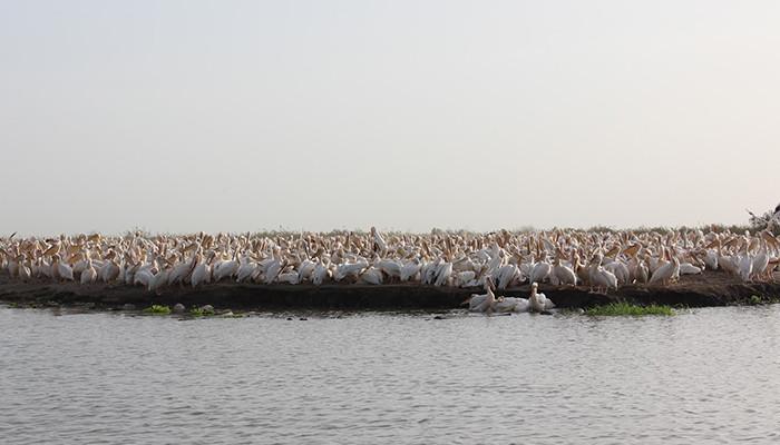 Senegal - Djoudj Ulusal Kuş Cenneti